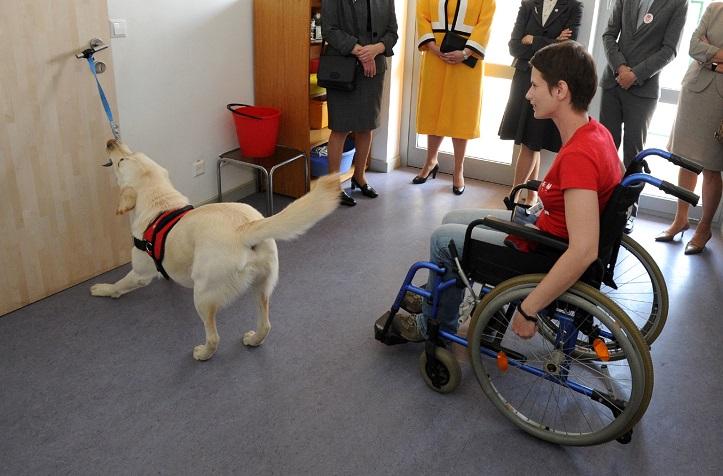 Slika rehabilitacijskog psa koji otvara vrata osobi u kolicima