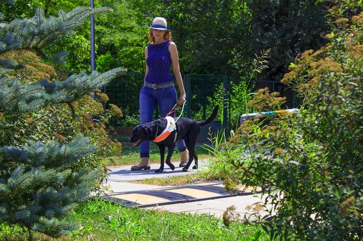 Slika slijepe korisnice u šetnji sa psom vodičem